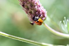 Defying the law of gravity! I'm always amazed by the wonders of nature. How does this tiny lady bug hang upside down and not be pushed off by gravity? Nature truly is our greatest teacher and we have so much more to learn. ...