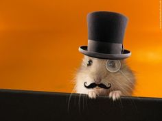 Tiny Top Hat And Monocle   Community Post: Tiny Hamsters Wearing Tiny Clothes