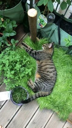 Cat Garden, Balcony Garden, Cat Grass, Cat Playground, Cat Room, Cat Furniture, Crazy Cats, Indoor Plants, Animals And Pets