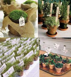 Small, potted plants as favors. They make cute and personal place cards/favors!