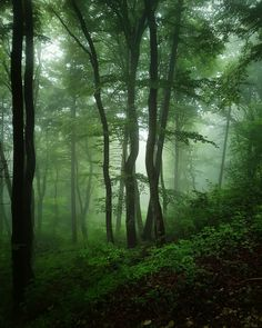 46 Ideas Nature Forest Trees Inspiration Walks For 2019 Misty Forest, Magic Forest, Tree Forest, Dark Forest, Landscape Photography, Nature Photography, Fantasy Forest, Walk In The Woods, Nature Scenes