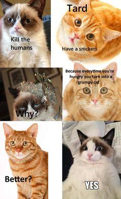 #GrumpyCat #Tard #Cats #Funny #Meme #humor #lol #snickers #cat #GC