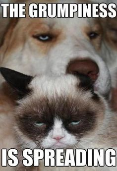 Grumpy+cat+and+dog+grumpy+cat+and+dog_0c4325_4602850.jpg