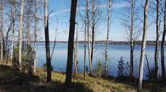 #koivut #järvi #lake #trees #Finland Valokuva - Google Kuvat