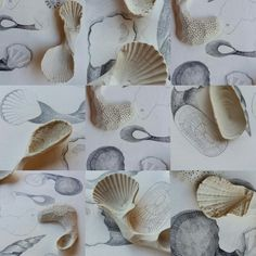 Collage of seashell inspired porcelain spoons Spoons, Sea Shells, Porcelain, Collage, Xmas, Plates, Ceramics, Inspired, Tableware