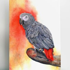 An African Grey painted in watercolour. This one is called 'Wise Guy.' #artofvisuals #artoftheday #wildlifeart #bird #parrot #watercolor #painting #art #artspotlight #artcollective #arthelp