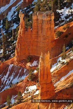 Bryce Canyon Hoodoos at Sunrise, Inspiration Point, Bryce Canyon National Park, Utah, USA