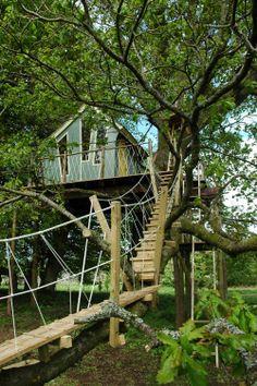 Rope Bridge to Dr Zeuss Treehouse