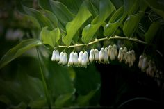 Spring - don't forget to find a shady spot for some Lily of the Valley