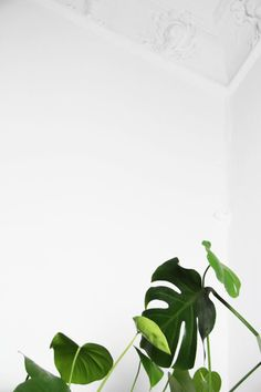 Plant in a white wall