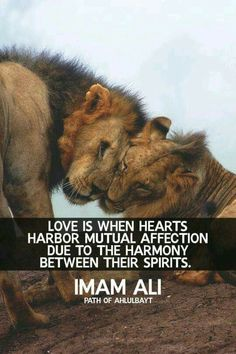 Love is when hearts harbour mutual affection.Imam Ali(a. Islamic Qoutes, Islamic Inspirational Quotes, Religious Quotes, Spiritual Quotes, Hazrat Ali Sayings, Imam Ali Quotes, Islam Marriage, Love Is When, Imam Hussain