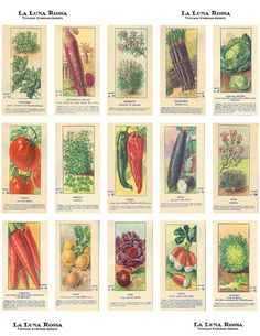 Vintage French Fruit and Vegetable Seed Packets - Ephemera - Decoupage - Digital Collage Sheet - Printable - Instant Download