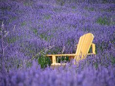 A Chair In A Lavender Field.