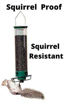 Squirrel Resistant Bird Feeders, Sunflower Kernels, Siskin, Red Squirrel, Goldfinch, American Red Squirrel, Greenfinch