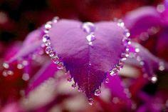 #flower#heart