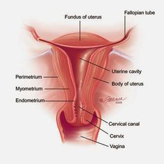 (disambiguation) The vagina is an internal sex organ in female mammals. Vagina may also refer to: Human Body Anatomy, Human Anatomy And Physiology, Pelvis Anatomy, Medical Anatomy, Medical Coding, Abdominal Pain, Body Systems, Midwifery, Women's Health