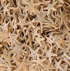 50 Tiny Starfish for Crafting or Decorating  by SeashellCollection, $4.00