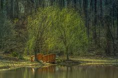 Weeping Willow Tree | by NatureImagesByDesign