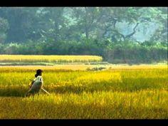 Fields of Gold Sean Keane.