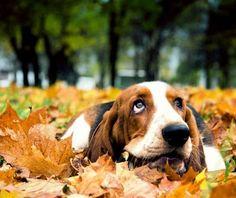 Autumnal doggy cuteness of the highest caliber.#MyVSFallEdit