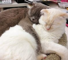 35+ Cutest Cat Pictures You Will Ever See