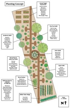 Permaculture garden design by Gabriel Capture