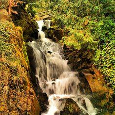 """Waterfall in Switzerland #waterfall #switzerland #forest""  Instagram"