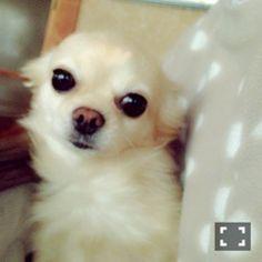 22歳になりました。   乃木坂46 衛藤美彩 公式ブログ
