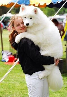 "Scout is Pyrenees and Samoyed. They call Samoyeds ""the dogs with Christmas in their eyes."" I have always loved that. Baby Animals, Funny Animals, Cute Animals, Big Dogs, I Love Dogs, Cute Dogs And Cats, Silly Dogs, Funny Dogs, Beautiful Dogs"