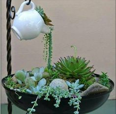 Mini jardim com suculentas Like the idea of the spilling of plants into a planter