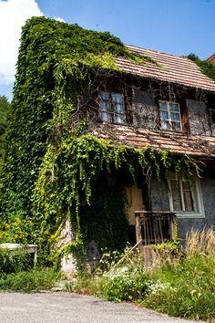 https://flic.kr/p/DrFpBt   wildwerk: Natur frißt Ruine