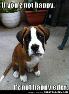 Empathetic Puppy Feels Your Feels