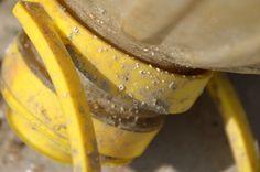 Dop van een fles in Calete de Velez #geel
