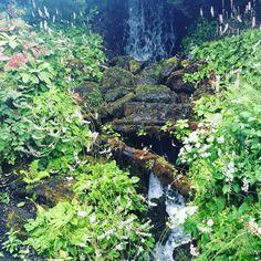 #edinburgh #botanicalgardens #nature #waterfall