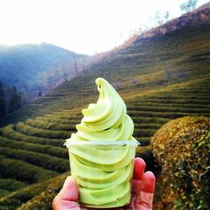 The most delicious green tea ice cream at the Boseong tea plantation!
