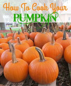 How To Cook You Pumpkin and what to do with it. This explains step by step how to make pumpkin puree. Then gives you some great recipes that use your pumpkin that your family will love.