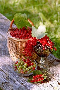 Gooseberry Bush, Fruit Picture, Good Morning Greetings, Sweet Cherries, Red Fruit, Food Decoration, Mixed Berries, Organic Recipes, Lovers Art