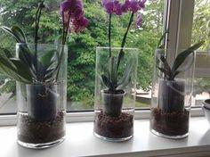 Я недавно писала пост о своих цветочках Марина omini_omini столько полезного написала в комментах, что мне жалко это там оставлять. Поэтому выношу все советы Марины…