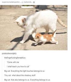 """27 Amusing Animal Memes That Are Too Cute For This World - Funny memes that """"GET IT"""" and want you to too. Get the latest funniest memes and keep up what is going on in the meme-o-sphere. Animal Jokes, Funny Animal Memes, Cute Funny Animals, Funny Animal Pictures, Cute Baby Animals, Cat Memes, Funny Cute, Cute Cats, Funny Memes"""