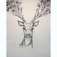 magnolia  #deer #flowers #spring #animals #drawing #pen #black #illustration