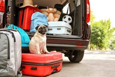 5 Things to Pack when you board your dog
