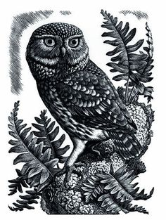 Charles Frederick Tunnicliffe (British, 1901-1979). Owl. (wood engraving)