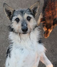 Paride: a lucky pup who was recently adopted! / recentemente adottato!