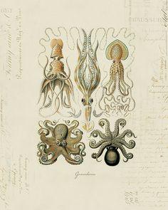 Vintage Octopus Squid on French Ephemera Print 8x10 by OrangeTail, $14.00
