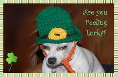 Leprechaun Dog Hat - free crochet pattern
