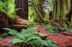 Redwood Forest; Crescent City, CA                    Most enchanting place I have ever been.
