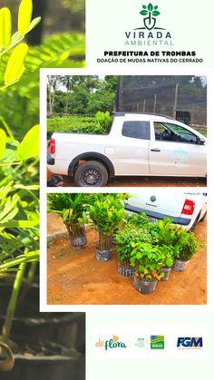 #deflorapaisagismo #nadefloratem Small Gardens, Gardening, Garden, Flowers