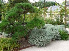 Что посадить на 6 сотках: идеальный набор деревьев и цветов