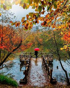 If the others are seasons, autumn is art. AutumnIn Turkey , Seven Lakes, Foto Nature, Smell Of Rain, Yellow Leaves, Parasol, Cute Little Animals, Fall Photos, Time Of The Year, Warm Colors, Rainy Days