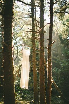 Woodsy Oregon Coast Elopement // Jane in the Woods Photographie